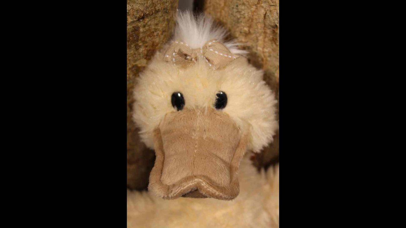Quack – image036