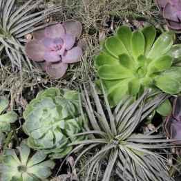 Composizione piante grasse in ciotola – IMG 6958 succ1
